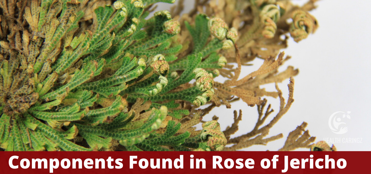 Components Found in Rose of Jericho