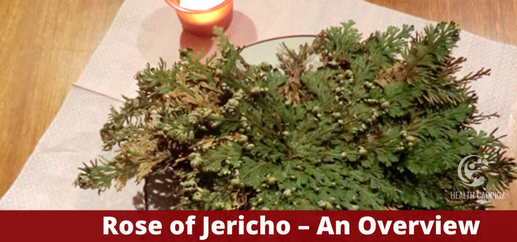 Rose of Jericho – An Overview