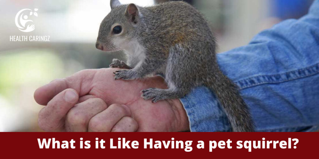 What is it Like Having a pet squirrel