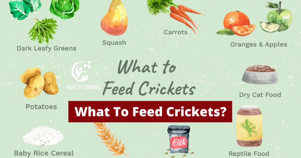 What To Feed Crickets